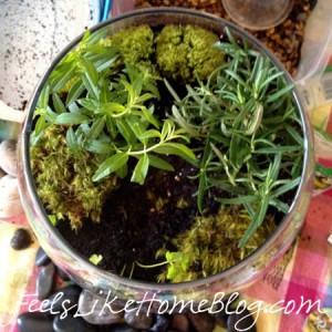 how-to-make-a-terrarium-add-moss